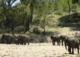 Namibia, Botswana, Simbabwe - Länderkombi