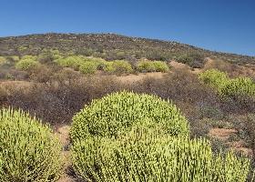 Südafrika Privatreise Namaqualand