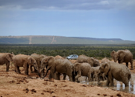Südafrika Mietwagenreise – Gardenroute und Umgebung