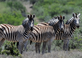 Südafrika - Unterwegs auf klassischer Route