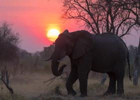 Botswana - Lodgesafari Hwange N.P. bis Chobe