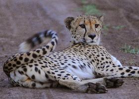 Namibia - Entspannt die Highlights entdecken