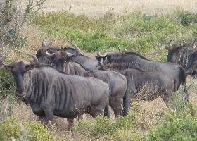 Südafrika Kurzreise - Safari & Königreiche