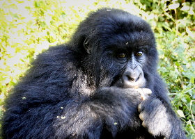 Uganda – Das beste von der Perle Afrikas