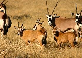 Namibia - Kurzreise Dünen und Wildlife