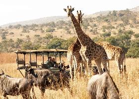 Südafrika – Safari & Megacity Kapstadt