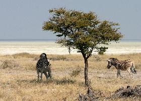Botswana Campingsafari - Zentral Kalahari